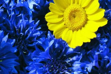 CSS_flower